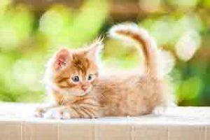 east-end-vets-glasgow-kitten-care