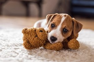 east end vets glasgow puppy care