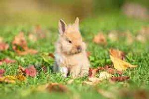 east-end-vets-glasgow-rabbit-care