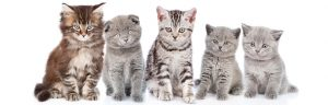 eastendvets-love-cats