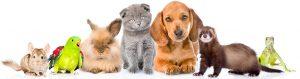 eastendvets-love-pets